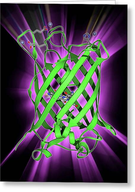 Green Fluorescent Protein Molecule Greeting Card by Laguna Design