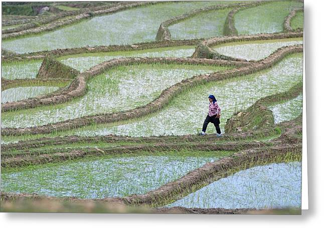 Hani Rice Terraces Near Yuanyang Greeting Card