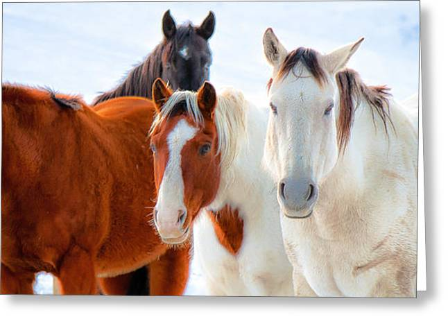 4 Horses Greeting Card