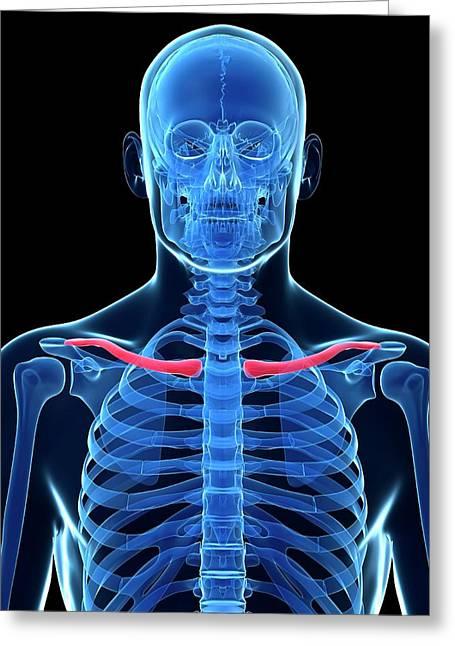 Human Collar Bone Greeting Card by Sebastian Kaulitzki