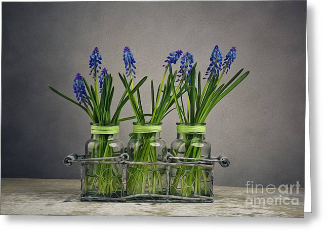 Hyacinth Still Life Greeting Card