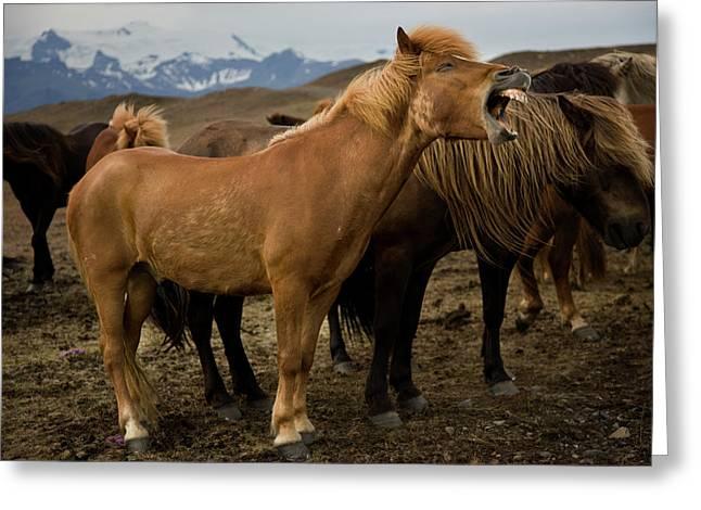 Iceland, Jokulsarlon Greeting Card by Jaynes Gallery