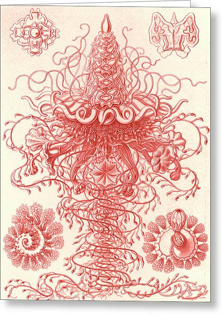 Illustration Shows Marine Invertebrates. Siphonophorae Greeting Card by Artokoloro
