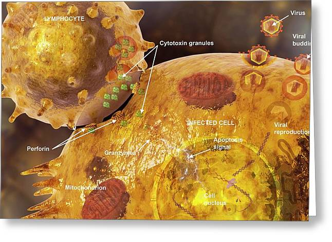 Immune Synapse Greeting Card by Carol & Mike Werner