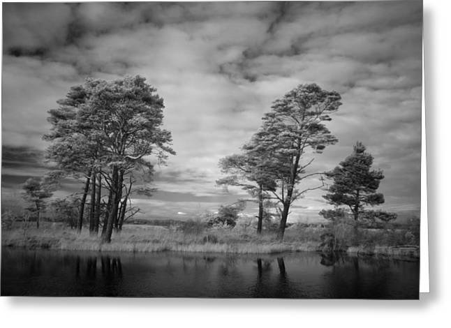 Infrared Picture Of The Nature Area Dwingelderveld In Netherlands Greeting Card