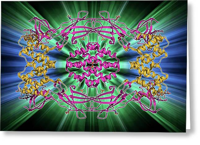 Interferon Antagonism By Viral Protein Greeting Card by Laguna Design
