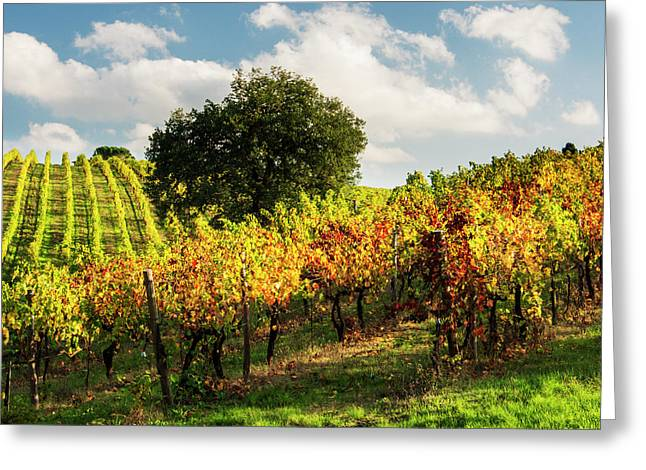 Italy, Tuscany, Chianti, Autumn Greeting Card