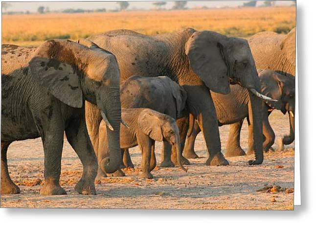 Greeting Card featuring the photograph Kalahari Elephants by Amanda Stadther