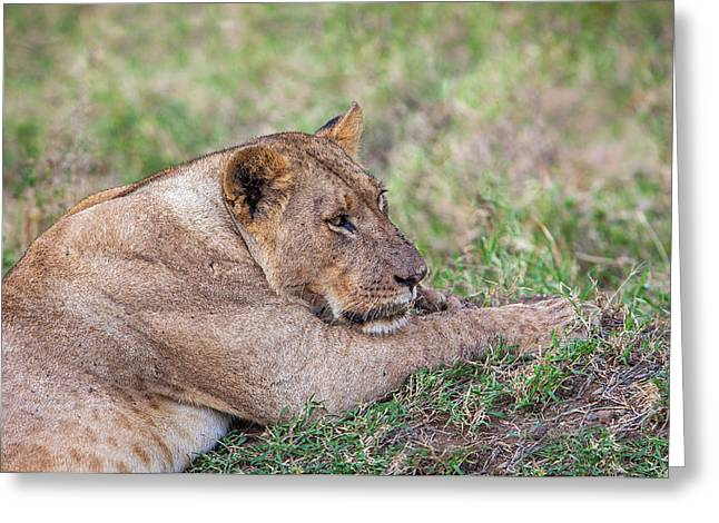 Kenya Greeting Card by Lucas Vallecillos