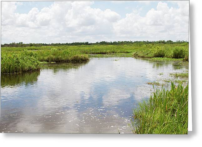 La, Lafitte, Airboat Swamp Tour Greeting Card by Jamie and Judy Wild