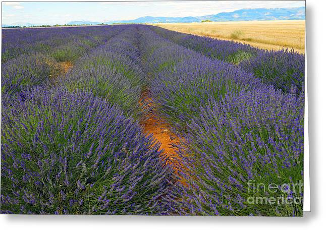 Lavender Field, French Provence Greeting Card by Adam Sylvester