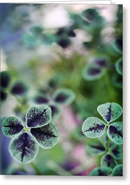 4 Leaf Clover Greeting Card by Nancy Ingersoll