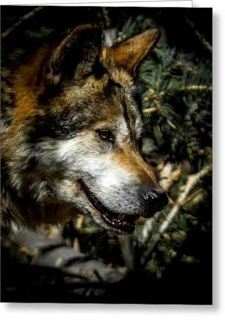 Mexican Grey Wolf Greeting Card by Ernie Echols