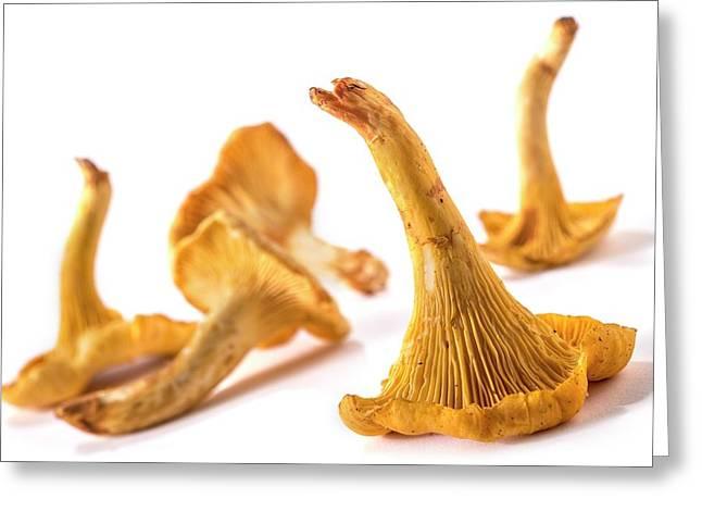 Mushrooms Greeting Card by Aberration Films Ltd