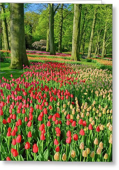 Netherlands, Lisse, Keukenhof Gardens Greeting Card