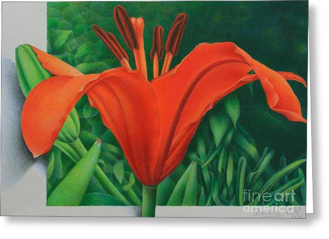 Orange Lily Greeting Card by Pamela Clements