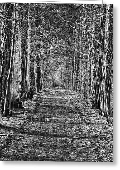 Greeting Card featuring the photograph Pathway by David Armstrong