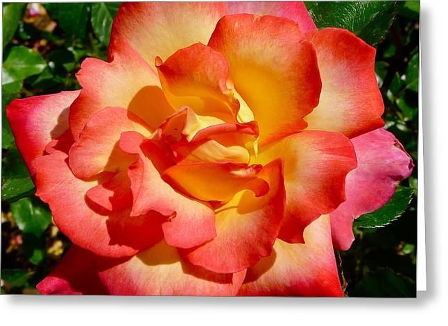 Rainbow Sorbet Rose Greeting Card