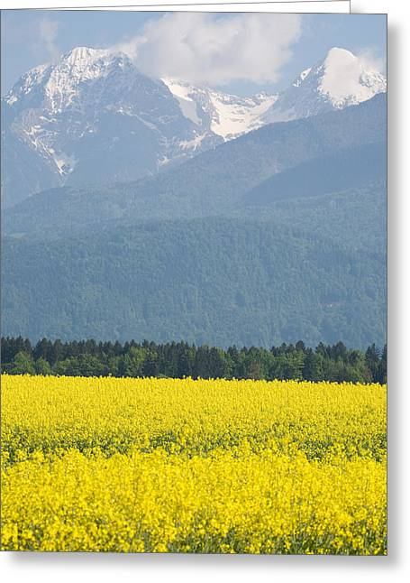rapeseed field in Brnik with Kamnik Alps in the background Greeting Card