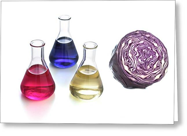 Red Cabbage Ph Indicator Greeting Card