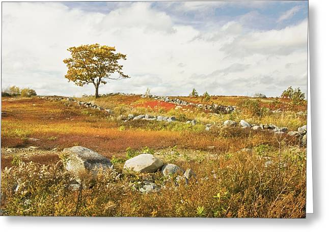 Blue Mountains Red Greeting Cards - Single Tree And Rock Wall In Maine Blueberry Field Greeting Card by Keith Webber Jr