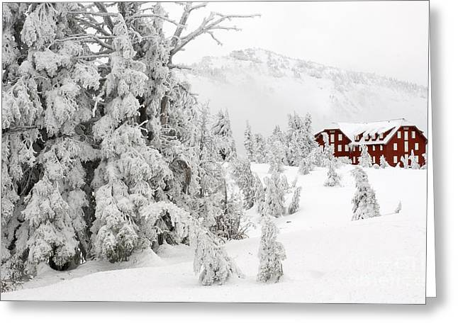 Snow And Ice On Trees Greeting Card by John Shaw