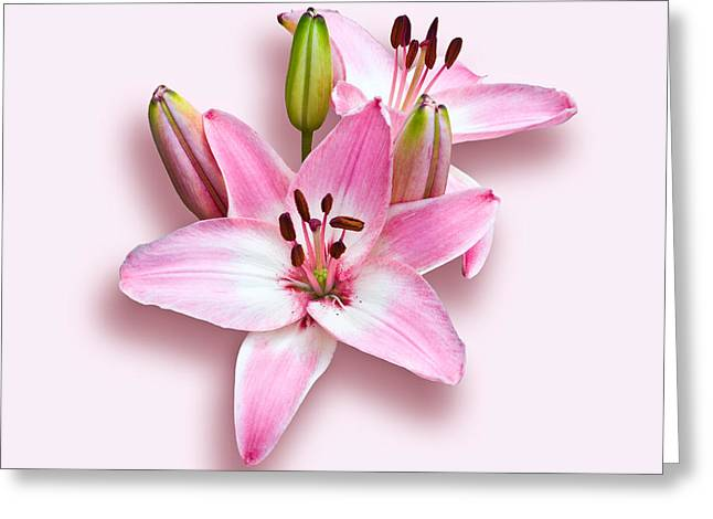 Spray Of Pink Lilies Greeting Card by Jane McIlroy