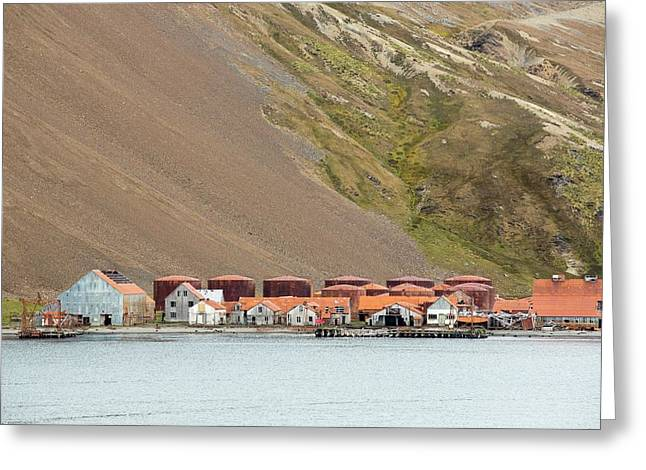 Stromness Whaling Station Greeting Card by Ashley Cooper