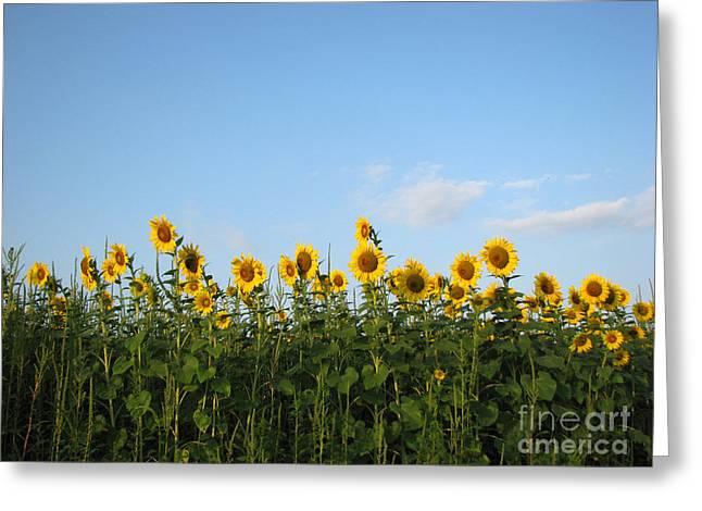 Sunflower Series Greeting Card