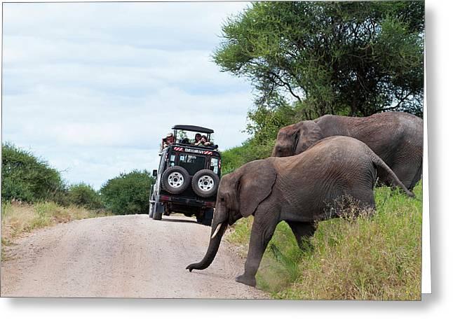 Tanzania, Tarangire National Park Greeting Card