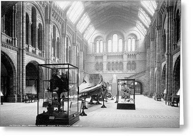The Natural History Museum Greeting Card by Natural History Museum, London