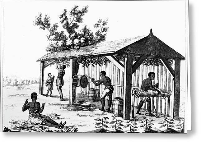 Tobacco Plantation Greeting Card by Granger