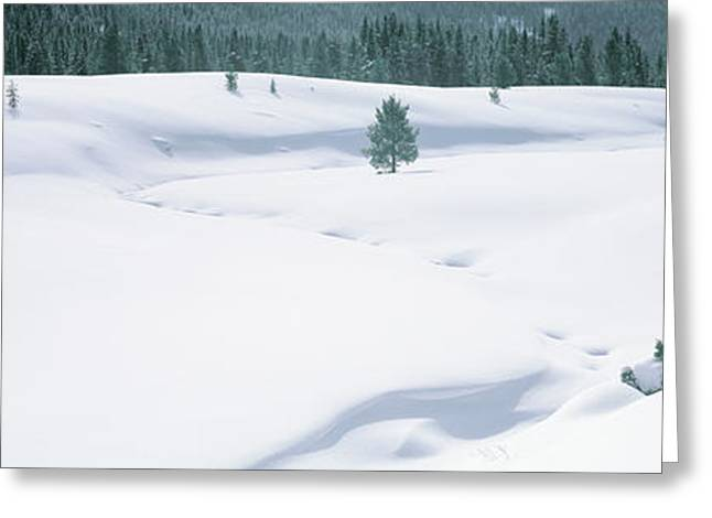 Trees On A Snow Covered Landscape Greeting Card by Panoramic Images