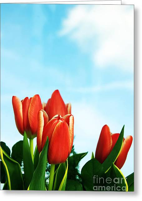 Tulips Background Greeting Card by Michal Bednarek