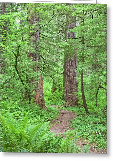 Usa, Washington, Olympic National Forest Greeting Card