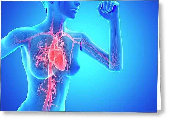 Vascular System Of Jogger Greeting Card by Sebastian Kaulitzki