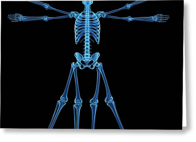 Vitruvian Man Skeleton Greeting Card by Sebastian Kaulitzki