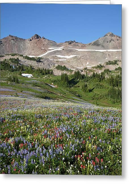 Wa, Goat Rocks Wilderness, Wildflower Greeting Card