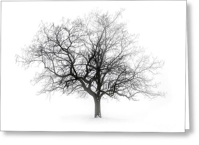 Winter Tree In Fog Greeting Card