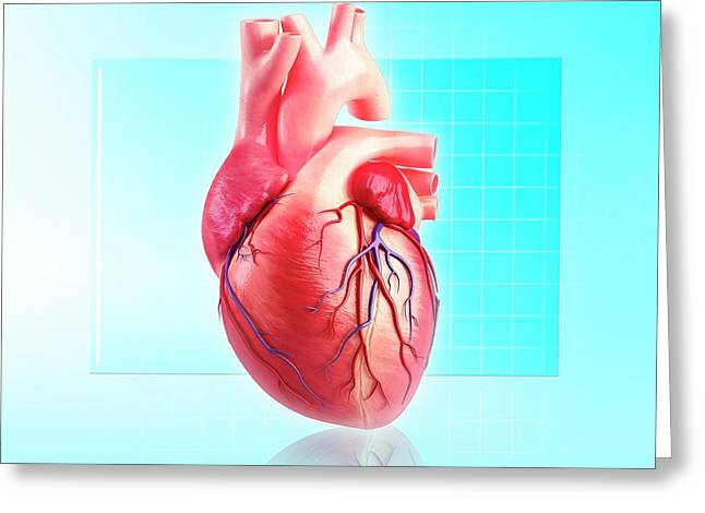 Human Heart Greeting Card by Pixologicstudio/science Photo Library