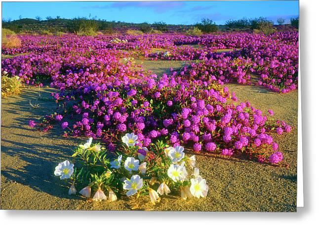 Usa, California, Anza-borrego Desert Greeting Card by Jaynes Gallery