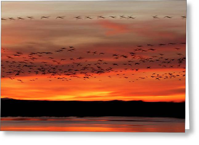 Usa, New Mexico, Bosque Del Apache Greeting Card by Jaynes Gallery