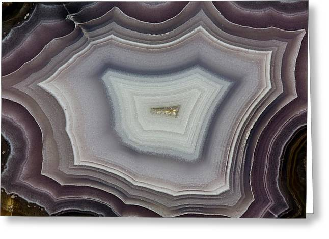 Banded Agate, Quartzsite, Az Greeting Card by Darrell Gulin