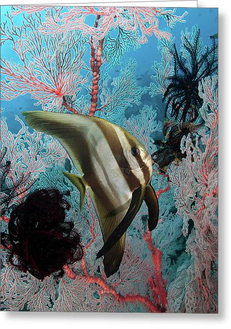 Indonesia, Papua, Raja Ampat Greeting Card