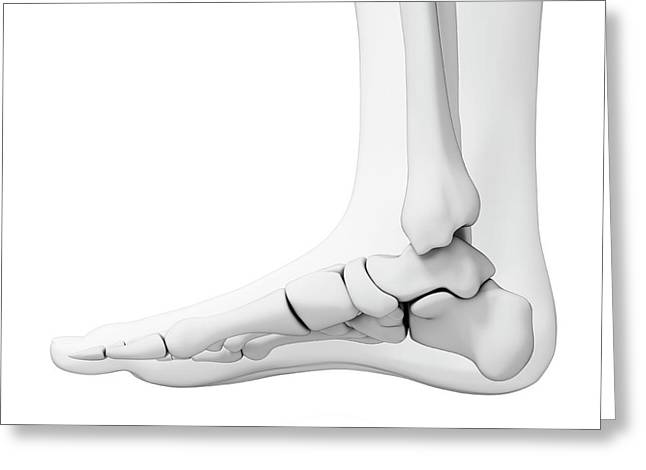 Human Foot Bones Greeting Card