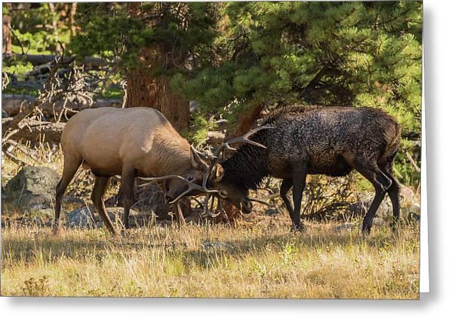 Usa, Colorado, Rocky Mountain National Greeting Card