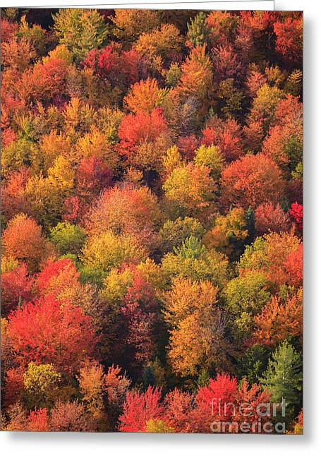 Aerial View Of Fall Foliage In Vermont Greeting Card