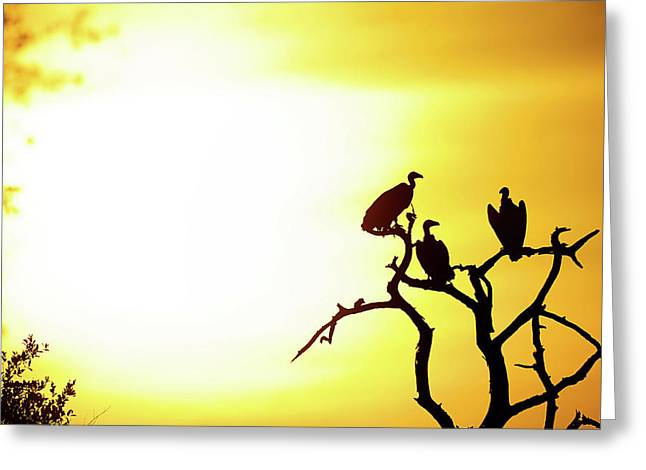 African Birds Greeting Card by Shannon Benson