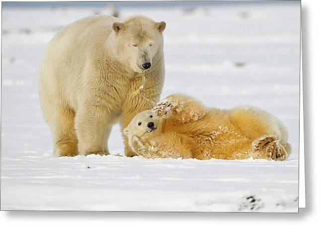 Arctic National Wildlife Refuge (anwr Greeting Card by Hugh Rose