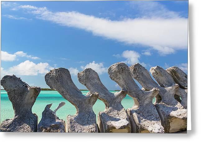 Bahamas, Exuma Island Greeting Card